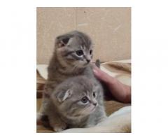 Продаем котят