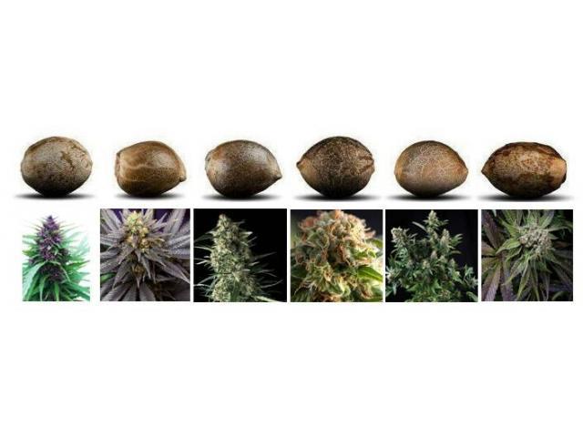 Продам коноплю харьков португалия марихуана разрешена