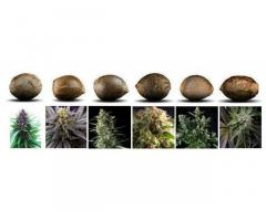 Продам специальные удобрения для конопли-марихуаны