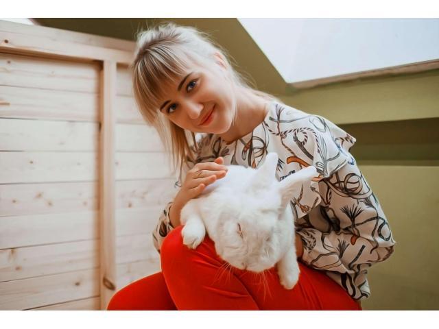 Аренда ручных Кроликов Аренда ручных Кроликов: ангорские кролики - 1/5