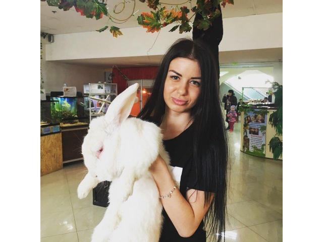 Аренда ручных Кроликов Аренда ручных Кроликов: ангорские кролики - 2/5