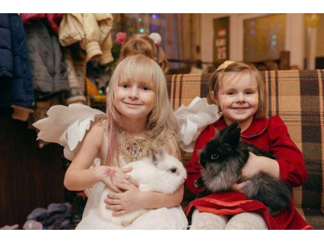 Аренда ручных Кроликов Аренда ручных Кроликов: ангорские кролики - 5/5