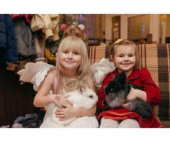 Аренда ручных Кроликов Аренда ручных Кроликов: ангорские кролики - Изображение 5/5