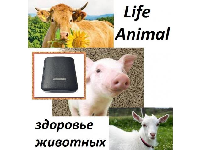 Помощь ветеринару прибор Life Animal. 4 мощности. Гарантия. - 1/6