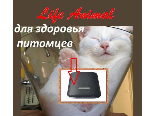 Помощь ветеринару прибор Life Animal. 4 мощности. Гарантия. - 3/6