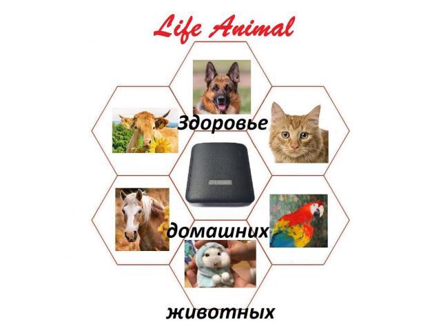 Помощь ветеринару прибор Life Animal. 4 мощности. Гарантия. - 4/6