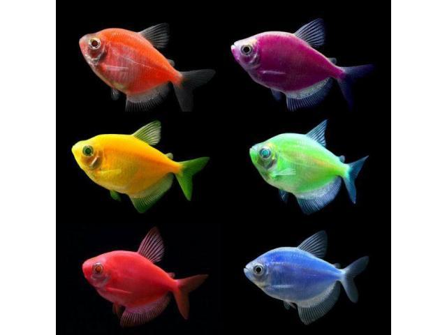 Интернет-магазин *aqua-fish.kiev.ua* - 2/8