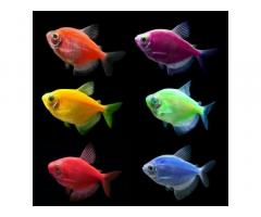 Интернет-магазин *aqua-fish.kiev.ua*