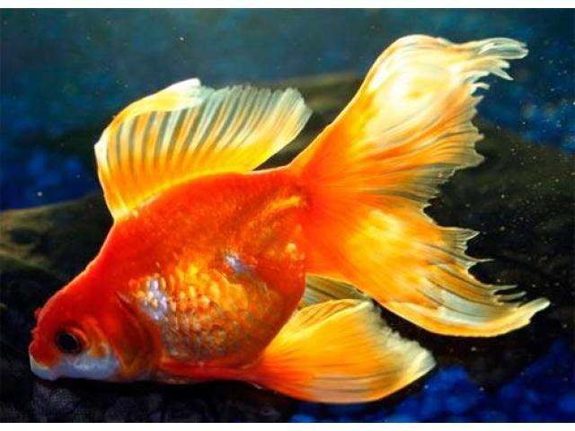 Интернет-магазин *aqua-fish.kiev.ua* - 8/8