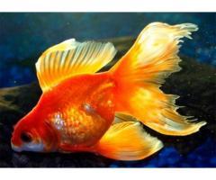 Интернет-магазин *aqua-fish.kiev.ua* - Изображение 8/8