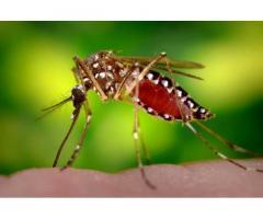 Обробка ділянок від кліщів та комарів Акарицидна обробка територій.