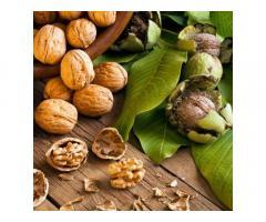 Саженцы ореха, сорта