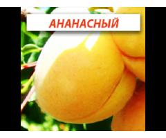 Саженцы абрикоса, нектарин