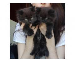 Милые кошечки ищут хозяев