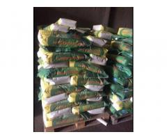 Семена кукурузы, насіння кукурудзи ТАР-349