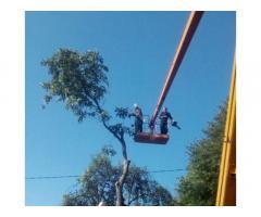 Спил дерева,демонтаж работы,земляные работы в ручную