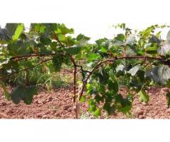 Опоры и колышки из композитных материалов для растений POLYARM от производителя