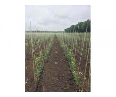 Опоры, колышки из композитных материалов POLYARM для растений от производителя