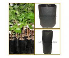Пакеты для саженцев Выращивание хвойных растений Выращивание ежевики
