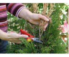 Уход за хвойными и декоративными растениями,