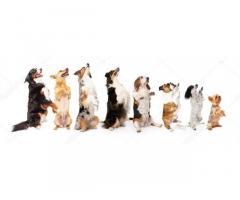 Профессиональная дрессировка собак !!!