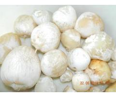 """Лечебный гриб """"Веселка"""" - Изображение 4/11"""