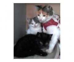 Котенятка-хлопчики і їх стерилізована мама шукають дім
