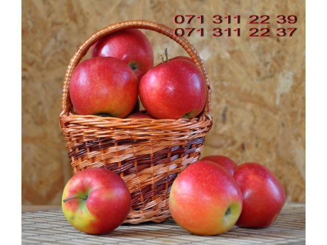 Красивые вкусные яблоки из сада - 1/10