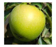 Красивые вкусные яблоки из сада - Изображение 5/10