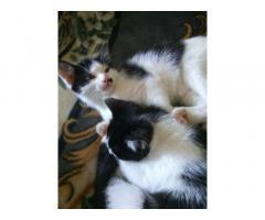 Котёнок. 3 месяца Отдам в добрые руки! БЕСПЛАТНО Киев